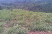 75 acre land for sale in Wayanad,  Kerala