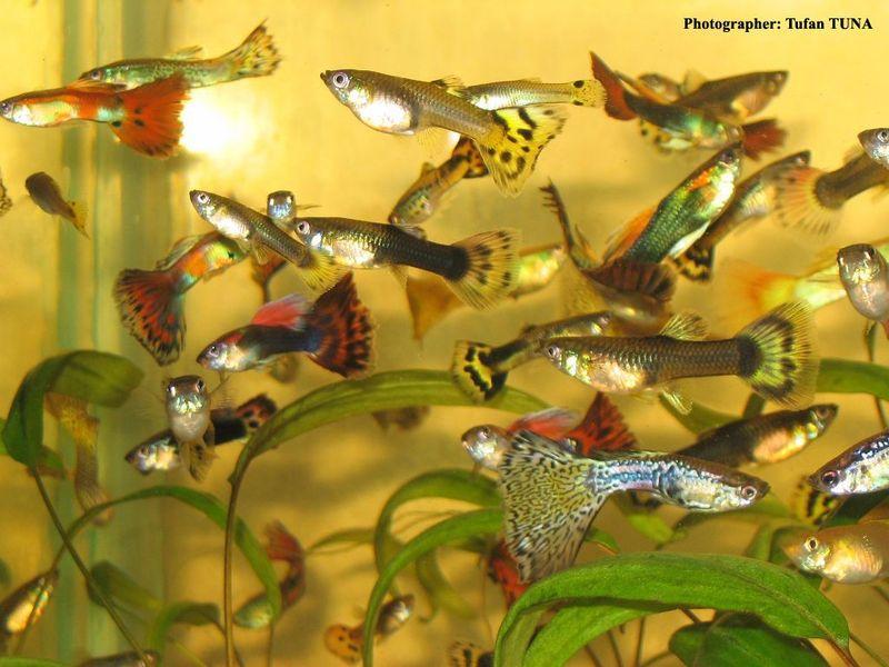 Breeders Of Aquarium Fish Kerala Fish For Sale Kerala 1503249