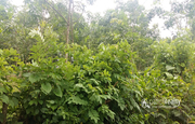Best price for 40 cent land near poothadi at 32lakh