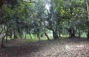 21 acre land for sale in Kodak.