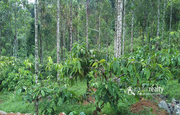 Well demanding 1acre land near Rippon at 45lakh