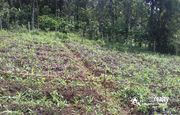 20 cent house plot for sale in kenichira at 20lakh