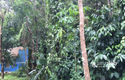 Well maintained 7.50 acre land with 3 houses for sale in Puthusseri