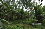 Well maintained 2 acre land in Ellumandam at 30lakh/acre
