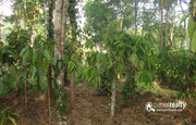 Well maintained 1 acre land for sale near Thirunelli Temple.wayanad