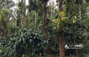 1 acre land for sale in kayakkunnu.wayanad