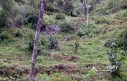 30cent land for sale in kattimoola near Mananthavady