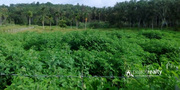 Well demanding 3.75 acre land for sale in Naikuppa.