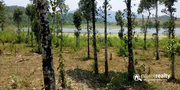 1 acre  water frontage land for sale near Karapuzha.