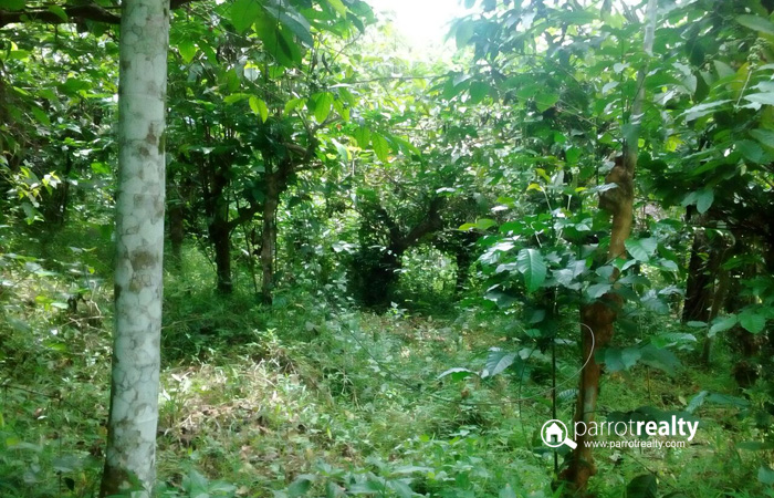 1 acre land for sale in kerala land for for Land for sale in kerala
