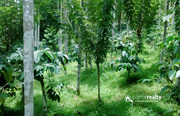 1 acre land for sale in Irulam.wayanad