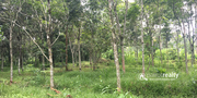Well maintained 30cent land for sale near Kenichira. wayanad