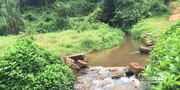 2 acre land for sale near Valad.wayanad