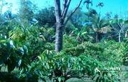 3 acre land for sale near koleri at 45lakh