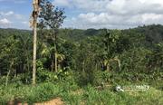 23cent land for sale near Ambalavayal at 9.20 lakh