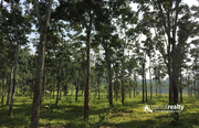 Land for sale in Nadavayal. Wayanad