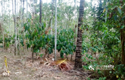 5 acre land for sale in Aalathoor near Pulpally.