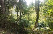 Well demanding 5 acre land for sale near kenichira.