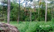 Well demanding 2 acre land for sale near  Padichira.