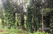1 acre land @ 3500000 in Vellamunda. Wayanad