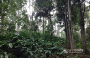 Well Demanded 7.50 acre land @ 20 lakh/acre in Meppadi. Wayanad