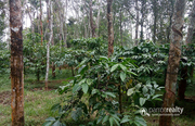1.60 acre land @ 75 lakh in Kaipattukunnu. Wayanad