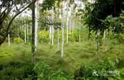 Well 2.50 acre land in 2th mile @ 35 lakh. Wayanad