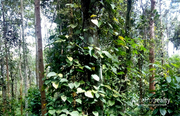 3 acre land @ 30 lakh/acre in kenichira. Wayanad