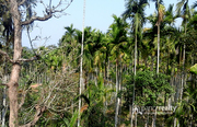 Well Demanded 5 acre land @ 25 lakh/acre in Cherukattoor. Wayanad
