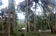 Well Demanded 7.50 acre hill top property@ 22 lakh/acre in Marakkadavu