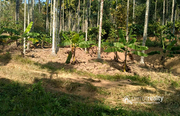 15 cent land in pulpally @ 7lakh. Wayanad
