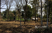 8 cent house plot in Kenichira @ 60000/cent. Wayanad