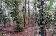well 44 cent land in Karingari,  Tharuvana @ 75000/cent. Wayanad