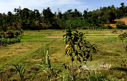 Well 1.15 acre Investment land in Kammana @  18 lakh. Wayanad