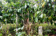 30 cent house plot in Kakkavayal @ 34 lakh. Wayanad