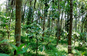 50 cent land in AKG @ 13 lakh. Wayanad