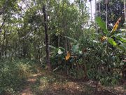 Agricultural Land for sale at Wayanad