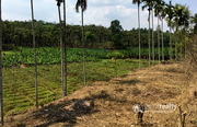 Excellent 42 cent house plot in pulpally @ 8lakh. Wayanad