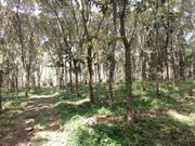 3 acre 65 cent land for sale at Wayanad