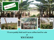 13 acre paddy field and 4 acre coffee land for sale at Panamaram