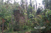Excellent 5.30 acre resort purpose land in Korome @ 1.50 Cr