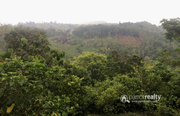 Excellent 2.50 acre resort purpose land near Padinjarathara @ 63 lakh