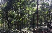Very good 1.50 acre Investment land near Vellamunda @ 23 lakh