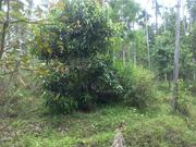 1 acre agricultural land for sale at Wayanad