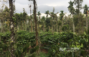 Well maintained 3acre land in palukunnu,  Panamaram @ 90lakh
