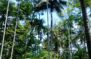 Well 1 acre investment land in Papplasseri @ 25 lakh