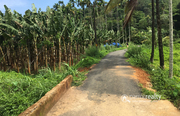 Excellent 5 acre resort purpose land in Kunjome @ 10 lakh/acre.