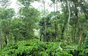 Excellent 3 acre investment purpose land  in kurukkanmoola