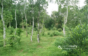 1.15 acre Investment land in Kammana @ 25 lakh
