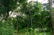 Well 50cent land in Society Kavala@17.50 lakh. Wayanad